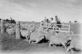 1950s-rural