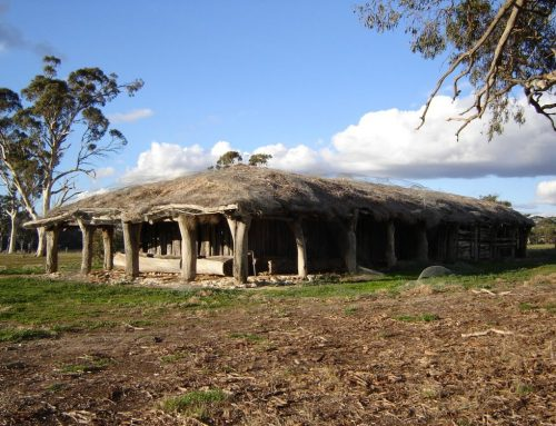 A thatched roof woolshed & a dirt floor