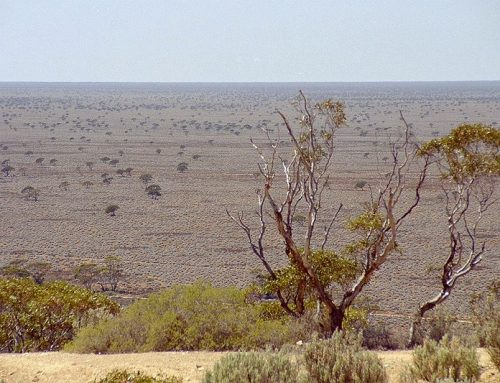 On the edge of the Nullarbor- Madura Station (Plains).