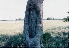 Aboriginal Scar Trees